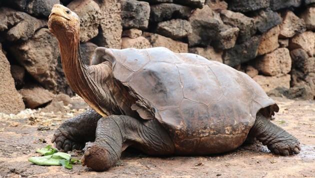 (Bild: Galapagos Conservancy)
