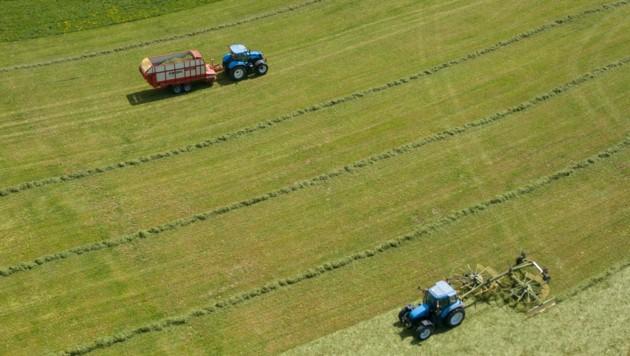 Die neue Regierung will die Landwirtschaft stärken. (Bild: Daniel Scharinger)