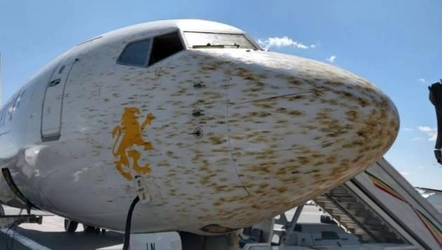 Millionen Heuschrecken tauchten plötzlich als Schwarm vor der Maschine auf. (Bild: Airlive)