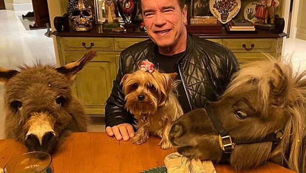 Arnold Schwarzenegger als Dr. Dolittle mit seiner tierischen Tischgesellschaft (Bild: instagram.com/schwarzenegger)