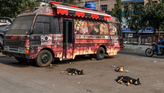Streuner sind in Indien überall anzutreffen. (Bild: AFP)