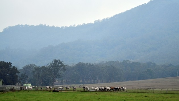 Die Regenfälle bringen Erleichterung und verbessern die Luftqualität. (Bild: AFP)