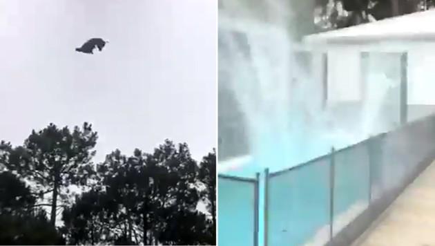 Mit einem lauten Platschen landete das Schwein im Pool ... (Bild: twitter.com/frascodflores)