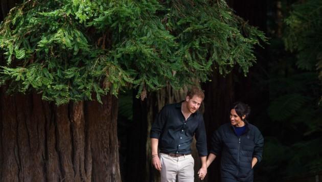 Prinz Harry und Herzogin Meghan bei einem Waldspaziergang in Neuseeland (Bild: Dominic Lipinski / PA / picturedesk.com)