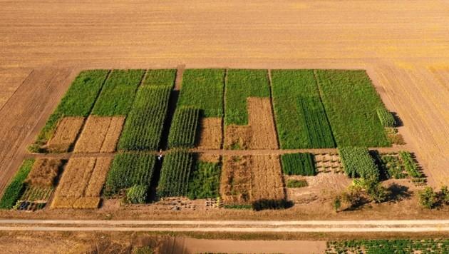 Ein Acker veranschaulicht den jährlichen Pro-Kopf-Verbrauch fürs Essen. (Bild: L&P Langbein & Partner)