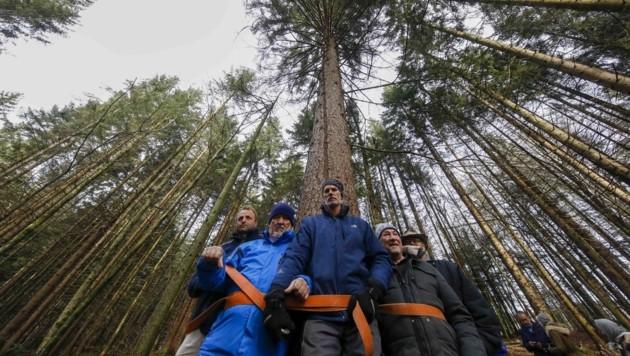 Indem sie sich an Bäume ketteten, starteten die Leitungsgegner den Protest in Bad Vigaun (Bild: Tschepp Markus)