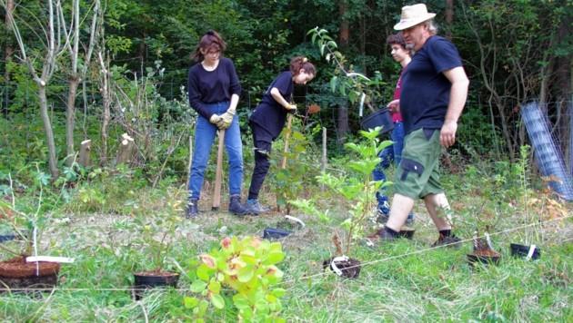 Am Hof wird Gemüse angebaut, das der Selbstversorgung dient, aber auch in Form von Gemüsekistln verkauft wird. (Bild: B.Pichler)