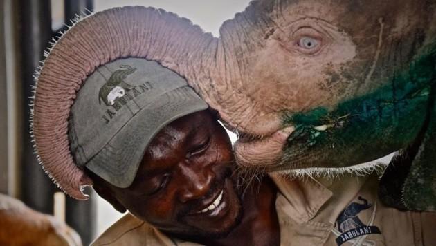 (Bild: facebook.com/Hoedspruit Elephant Rehabilitation and Development)