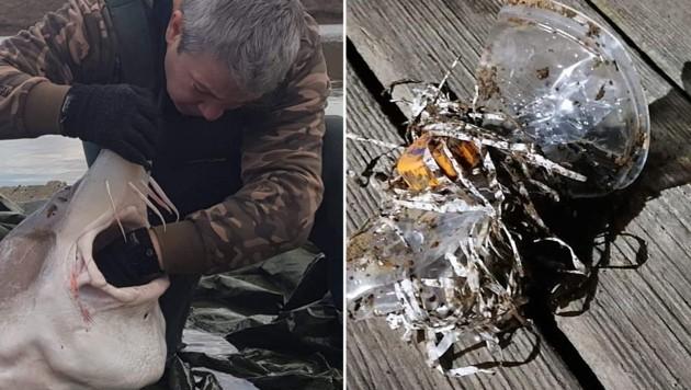 Der Stör hatte einen Klumpen Plastikmüll in seiner Kehle stecken. (Bild: WWF/Dan Constantin)