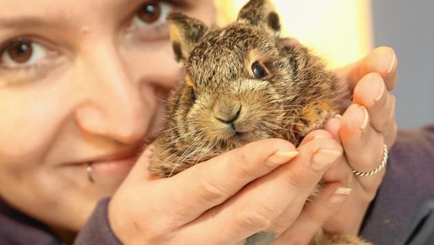 Die kleinen Wildtiere in Not dürfen sich auf eine neue Heimat freuen (Bild: Juergen Radspieler)