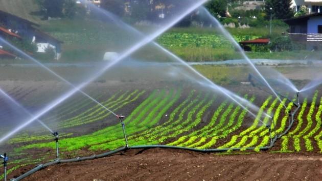 Ohne neue Bewässerungskonzepte wird's nicht gehen. Die Zahl der Regentage nimmt in der Steiermark kontinuierlich ab. (Bild: Christof Birbaumer)