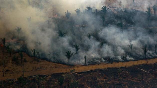 Waldbrände und Rodungen setzen dem Amazonas Regenwald enorm zu. (Bild: AFP)