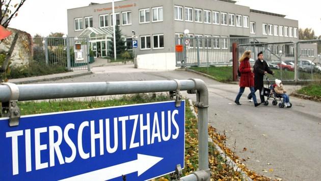 Das Tierschutzhaus in Vösendorf (Bild: APA/GUENTER R. ARTINGER)