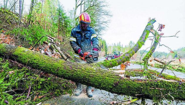 Zahlreiche Einsätze nach Sturm. Bilder aus Hühnergeschrei eine Ortschaft der Gemeinde Altenfelden wo zahlreiche Bäume Straßen unpassierbar waren. (Bild: FOTOKERSCHI.AT / KERSCHBAUMMAYR)