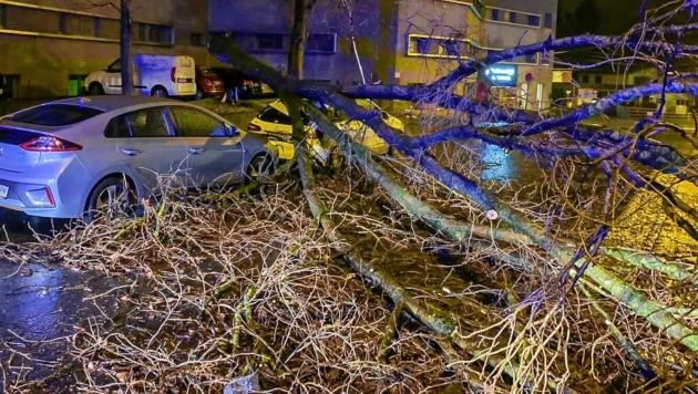 In der Ignaz-Härtl-Straße ist ein Baum auf ein Auto gestürzt (Bild: Markus Tschepp)