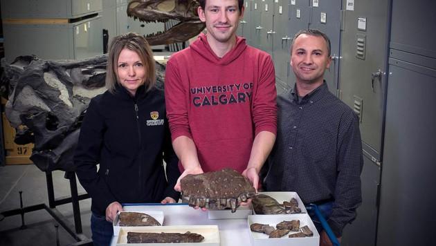 Darla Zelenitsky und ihre Forscherkollegen mit den fossilen Überresten von Thanatotheristes degrootorum (Bild: Royal Tyrrell Museum)