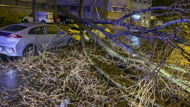 Ein Baum fiel in der Ignaz-Härtl-Straße auf ein geparktes Auto (Bild: Tschepp Markus)