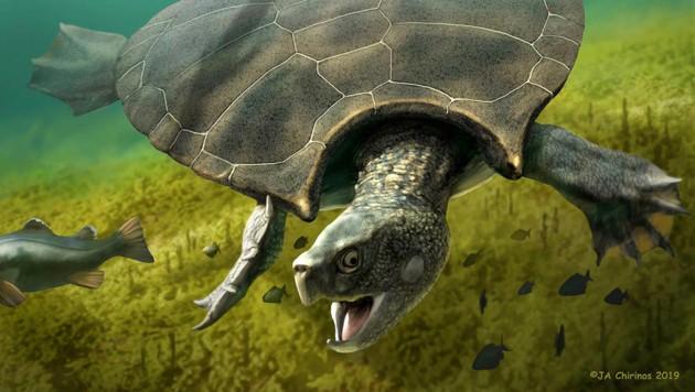 Künstlerische Darstellung: So könnte Stupendemys geographicus (im Bild ein männliches Tier) ausgesehen haben. (Bild: Jaime Chirinos)