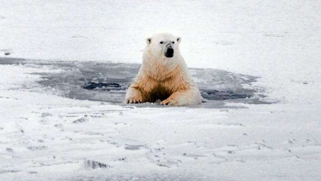 (Bild: Rasmus Törnqvist/Greenpeace)
