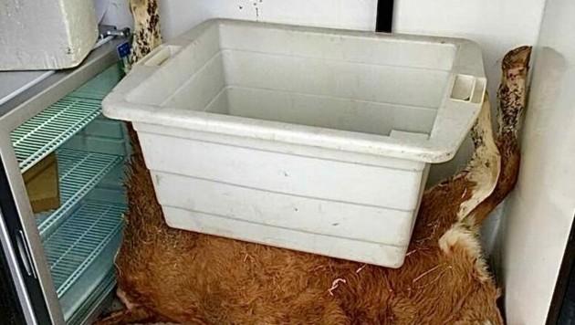 In diesem Kühlschrank (li.) wurden die Virus-Proben gelagert - daneben liegt ein totes Kalb. (Bild: KK/Team Kärnten)