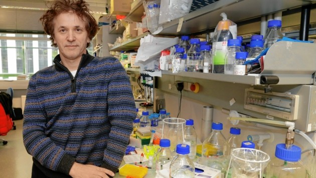 Penninger in seinem Element: Der Forscher gilt als Hoffnung für die Menschheit im Kampf gegen Corona. (Bild: Klemens Groh)