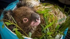 (Bild: Miroslav Bobek/Zoo Prag)