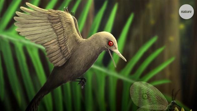 Künstlerische Illustration: So könnte der vogelähnliche Mini-Dinosaurier ausgesehen haben. (Bild: kameraOne/Nature)