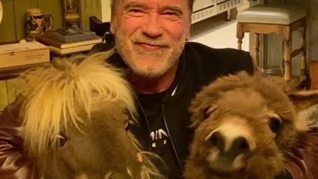 Arnold Schwarzenegger bleibt zu Hause und füttert lieber seine Haustiere. (Bild: twitter.com/schwarzenegger)