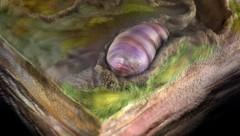 Künstlerische Darstellung: So könnte Ikaria wariootia ausgesehen haben. (Bild: Sohail Wasif/UCR)