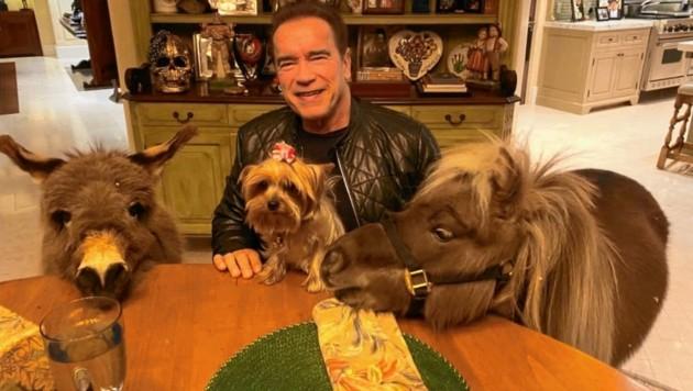 (Bild: Arnold Schwarzenegger)