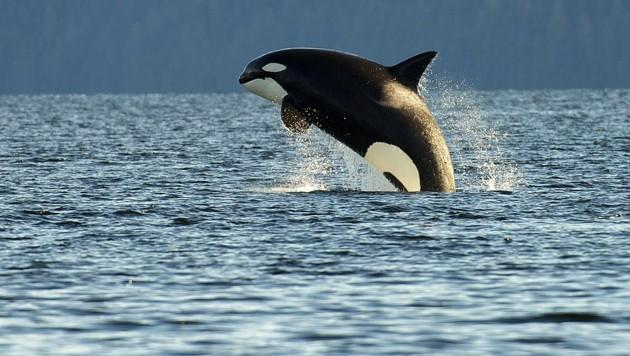 (Bild: Greenpeace/Oliver Salge)