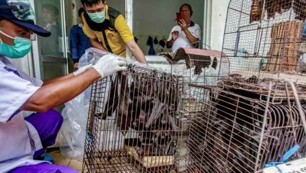 Gesundheitsbeamte inspizieren einen Wildtiermarkt in Indonesien. (Bild: AP)