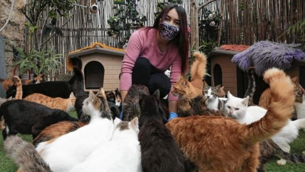 Chinesische Forscher fanden heraus, dass sich Katzen bei infizierten Corona-Patienten mit dem Virus anstecken können. Entwarnung gibt es für Geflügel und Hunde. (Bild: AFP)