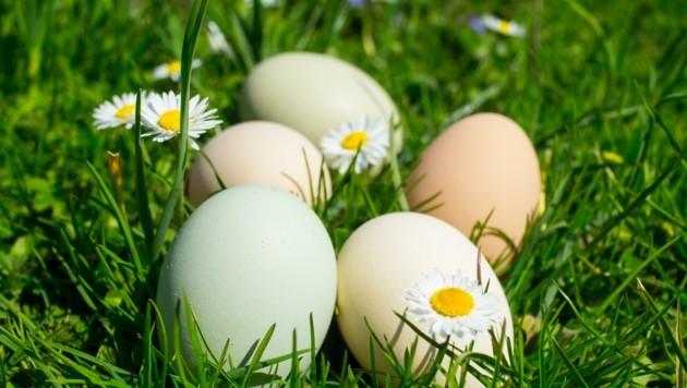 Grün, weiß, beige, braun: Karoline Greimel braucht an Ostern ihre Eier nicht färben. (Bild: Christoph Laible)
