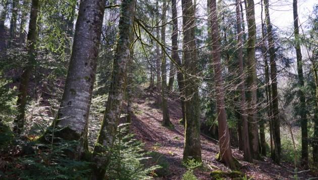 Der Wald ist ein vielseitiges Ökosystems mit einer überaus artenreichen Tier- und Pflanzenwelt. (Bild: zvg/Waldschule Bodensee)