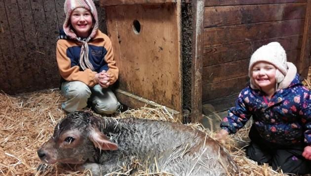 Überglücklich sind Emely (8) und ihre kleine Schwester Celine (2) vom Haimburgerberg über die Geburt von Grauvieh-Kalb Mika. (Bild: Annika Besser)
