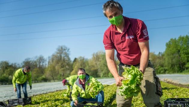 Die steirischen Bauern sorgen dafür, dass unsere Tische reichlich gedeckt sind. (Bild: LK)