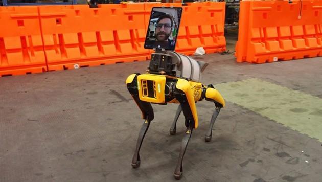 Mit Tablet und Kamera ausgestattet, empfängt Spot in einem Krankenhaus in Boston neue Covid-19-Patienten. (Bild: Boston Dynamics)