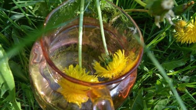 Das reine Wasser aus dem Furkagebiet ist das Speichermedium und kann mit Informationen der Pflanzen, also den Essenzen von beispielsweise dem Löwenzahn aufgeladen werden. (Bild: zvg/Reisch)