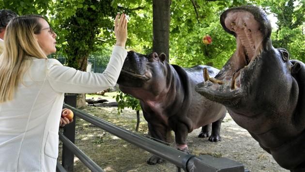 Margarete Schramböck (ÖVP) ist als Wirtschaftsministerin auch für den Tiergarten Schönbrunn zuständig.