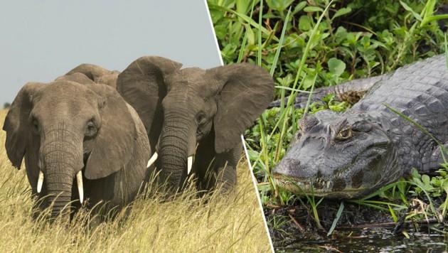 (Bild: © Markus Mauthe / Greenpeace, © Hernan Perez Aguirre / Greenpeace, krone.at-Grafik)
