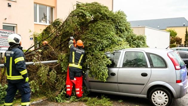 In Enns stürzte im Kaltwetter-Sturm am Montag ein Baum auf mehrere abgestellte Fahrzeuge und beschädigte diese. (Bild: Kerschbaummayr Werner)
