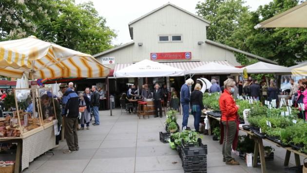 Die alte Markthalle am Lendplatz wird saniert. (Bild: Christian Jauschowetz)