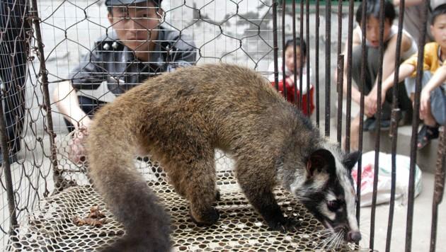 Am Wildtiermarkt in Wuhan wurden alle möglichen Wildtiere angeboten - so wie diese Zibetkatze.
