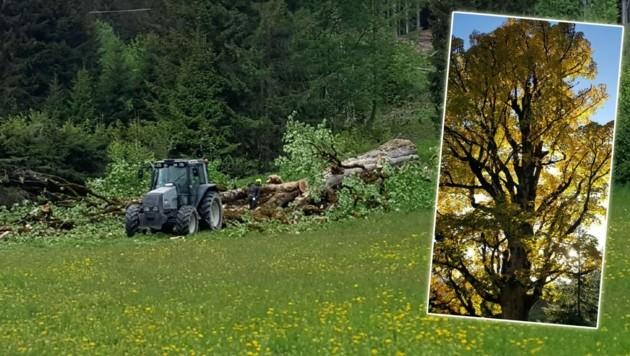 Das uralte Holz wird abtransportiert: Gegner schlagen Alarm (Bild: zVg)