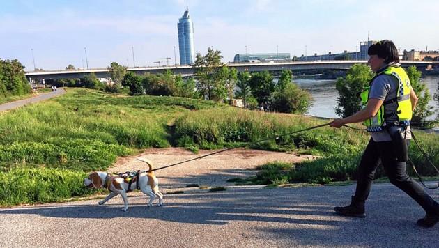 Suchhunde erschnüffelten auf einem Parkplatz in der Nähe der Floridsdorfer Brücke den Geruch des Mädchens. (Bild: www.suchhund.eu)
