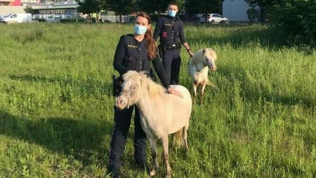 Diese zwei ausgebüxten Ponys konnten von der Polizei wieder eingefangen werden. (Bild: Polizei Steiermark)