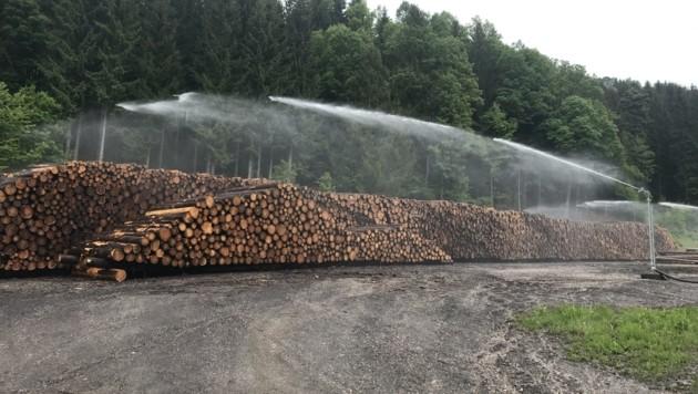 In den vergangenen Wochen wurden 4000 Festmeter Holz im neuen Nasslager im Lavanttal eingelagert und qualitativ gesichert. (Bild: WWG Kärnten)