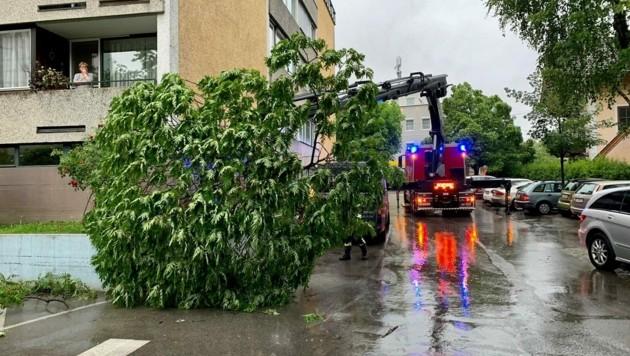 Bei der Maxglaner Hauptstraße fiel ein Baum auf ein Auto (Bild: Markus Tschepp)