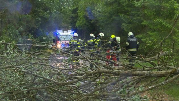 Die FF Mitterberg hatte mit einigen umgestürzten Bäumen zu kämpfen. (Bild: BFV Liezen/Schlüßlmayr)